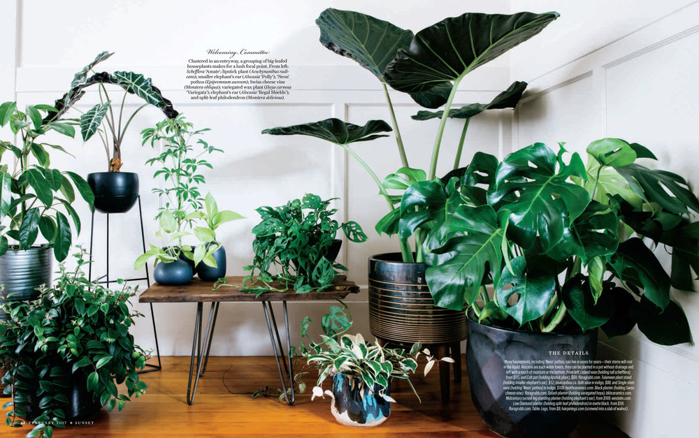 HousePlants-3.jpg