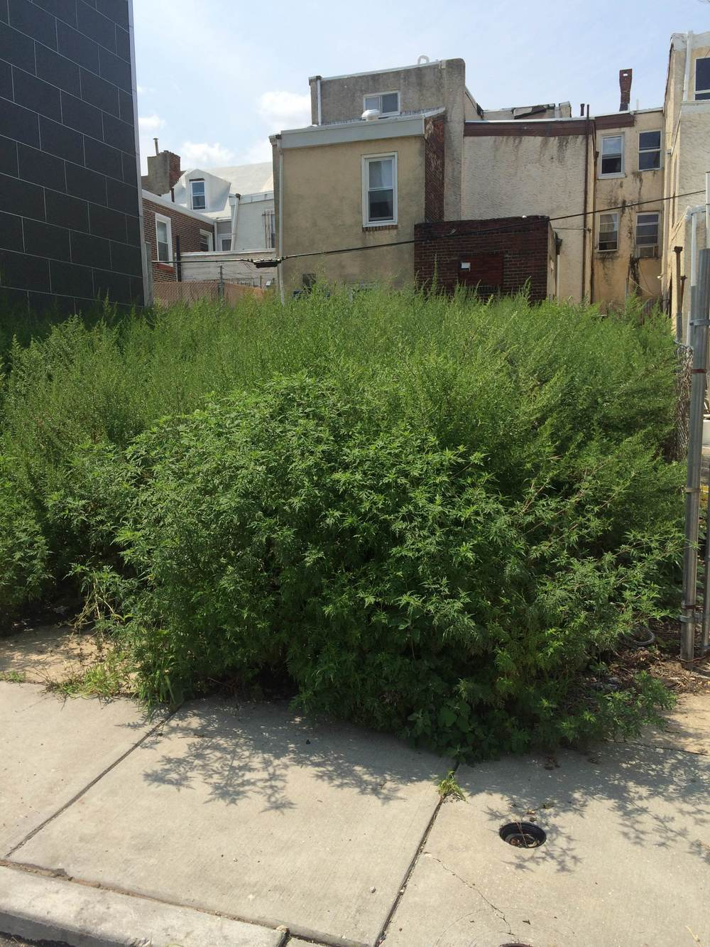 The lot on the 1300 block of Palethorp before SKCP & Philly 311 intervention