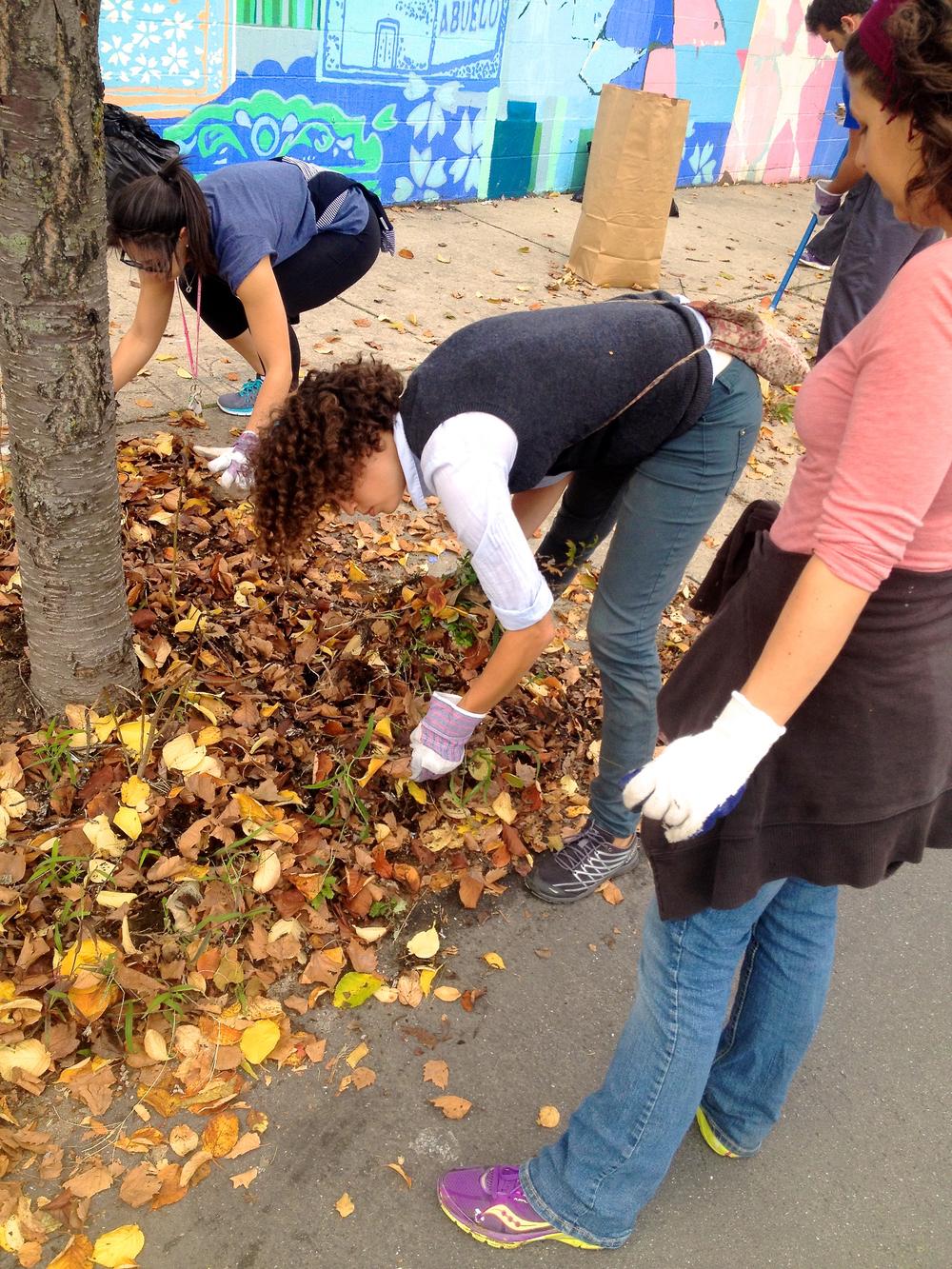 Fall_Cleanup_02.jpg