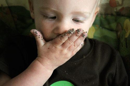 toddler eating chia seeds