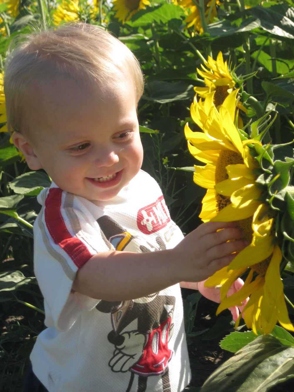 Seed Spotlight...Sunflower! http://www.yourfoodstory.com/blog/2015/1/30/seed-spotlightsunflower