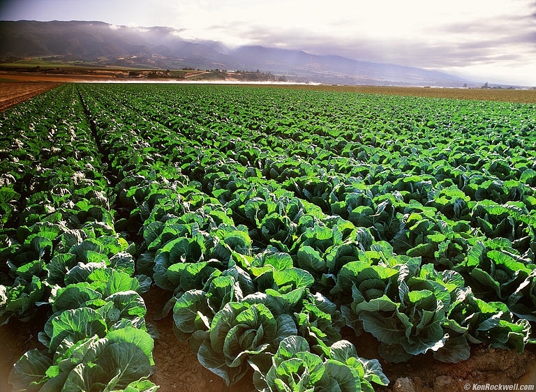 Vegetable Spotlight Collard Greens Your Food Story