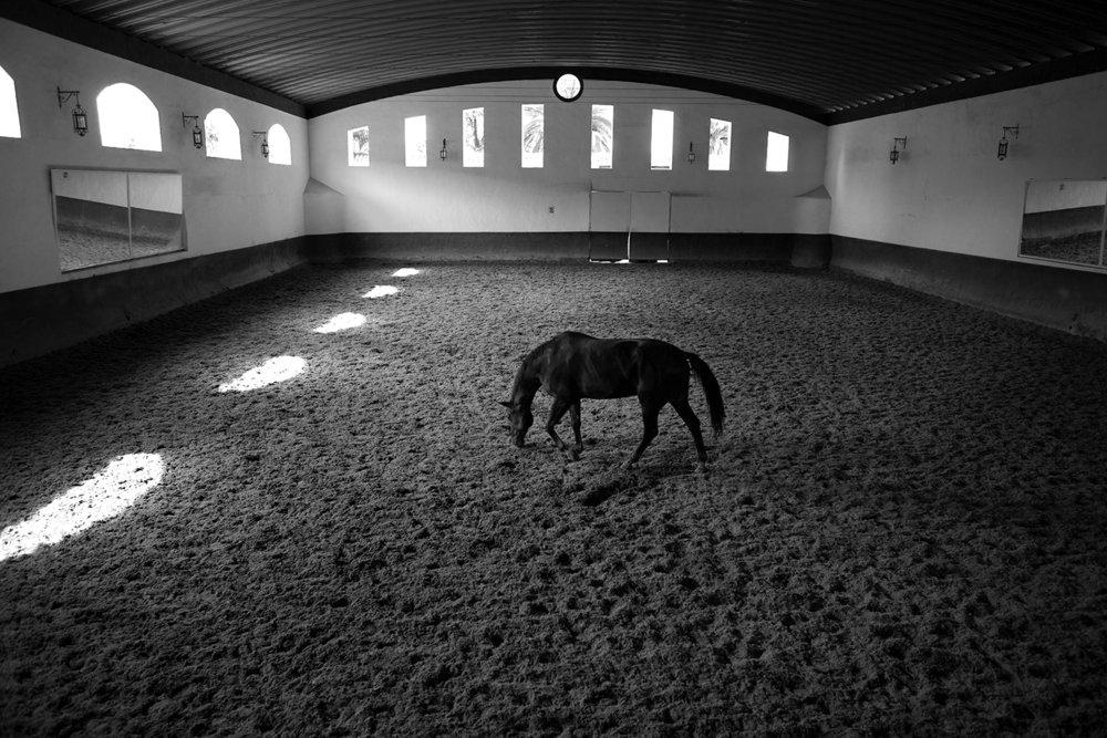 HorseStable_10x15-Ronda_SquareSpace.jpg