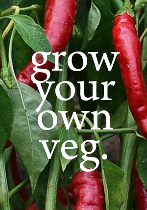 There is nothing more rewarding than growing your own produce. Every cottage and apartment has ...