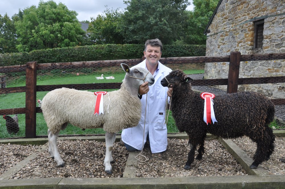 Steve, with a couple of lambs - our prize-winners from Moreton show, September 2017