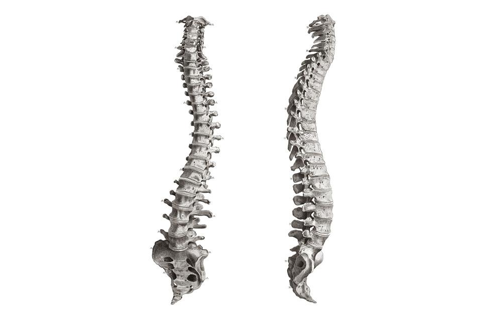 backbone.jpg