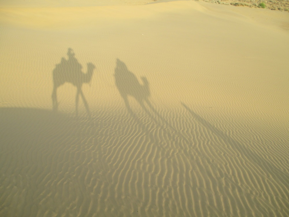 long two camel shadow.JPG