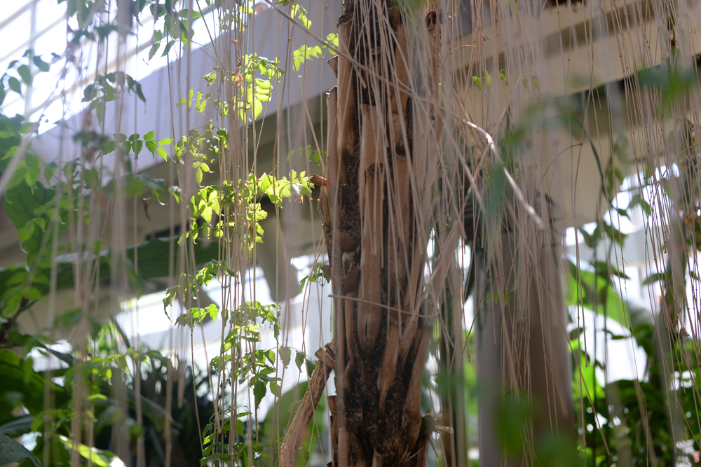 150404_hkp_botanicalgardens006.jpg