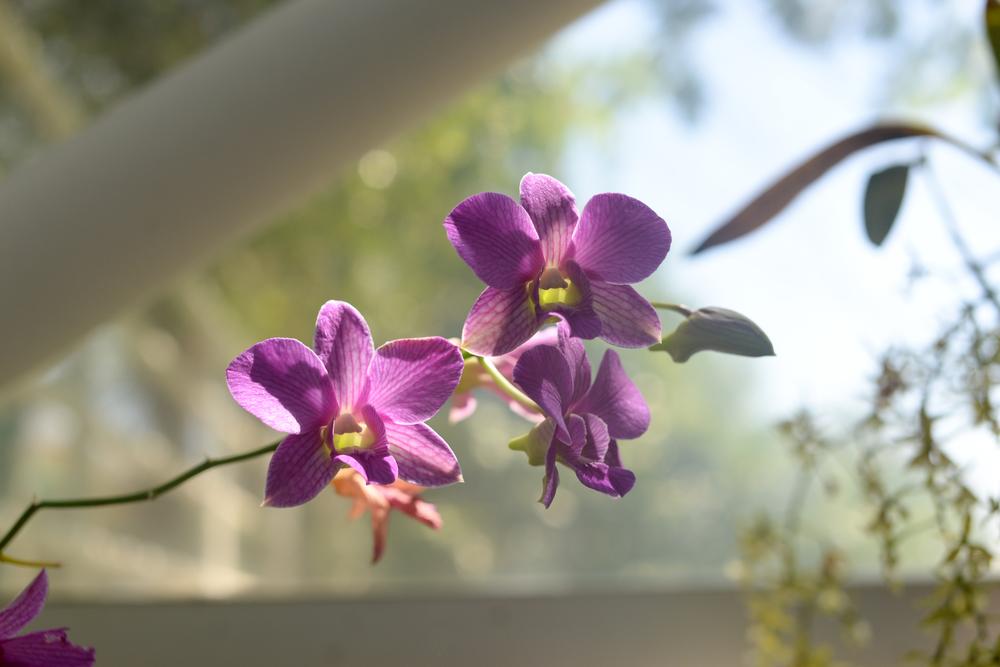 150404_hkp_botanicalgardens003.jpg