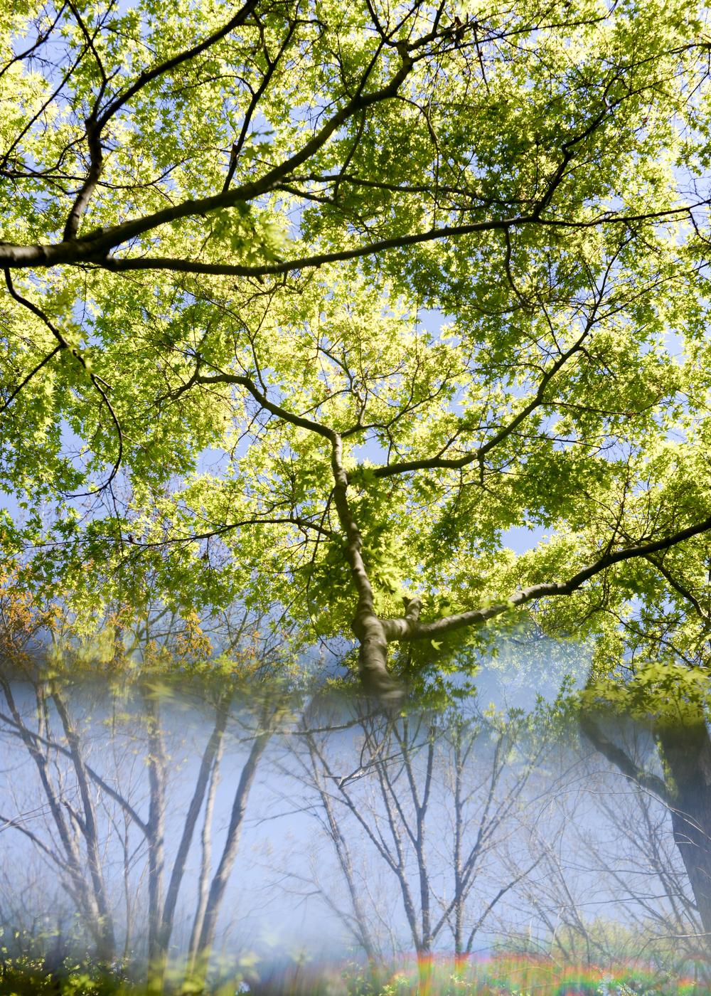 150404_hkp_botanicalgardens032.jpg