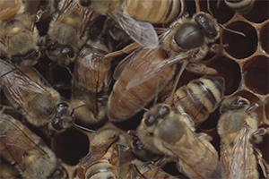 A BEEKEEPER'S EXPLORATION