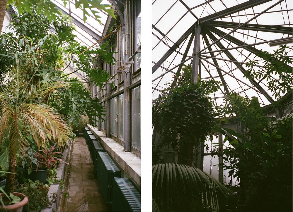 BotanicalGarden2.jpg