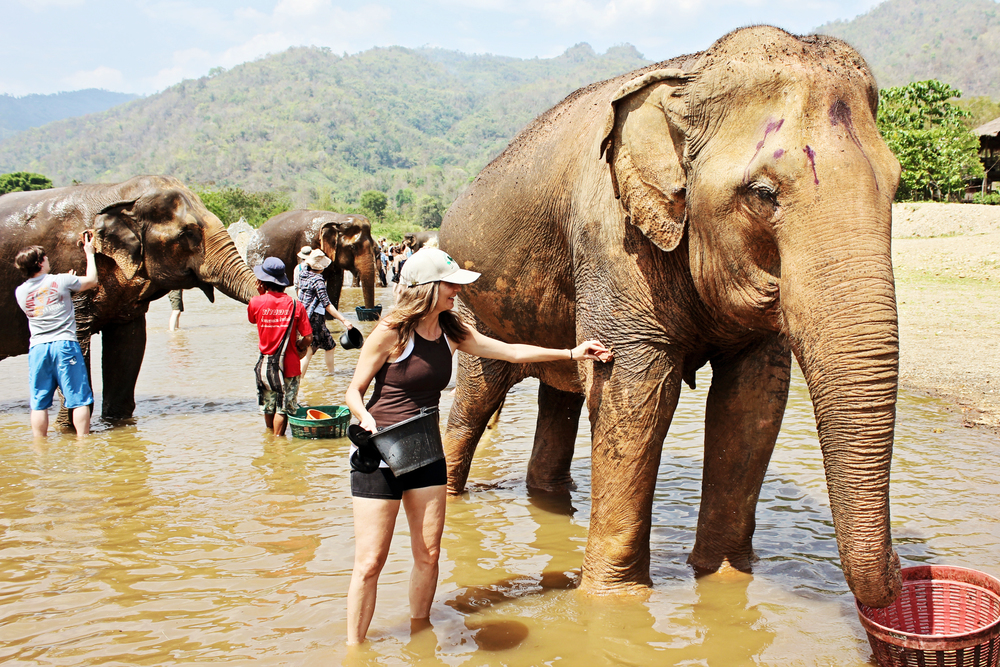 Elephant Nature Park, Northern Thailand