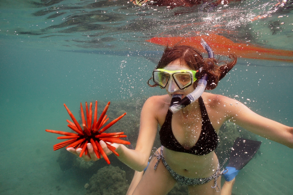 Snorkeling in Maui, Hawaii