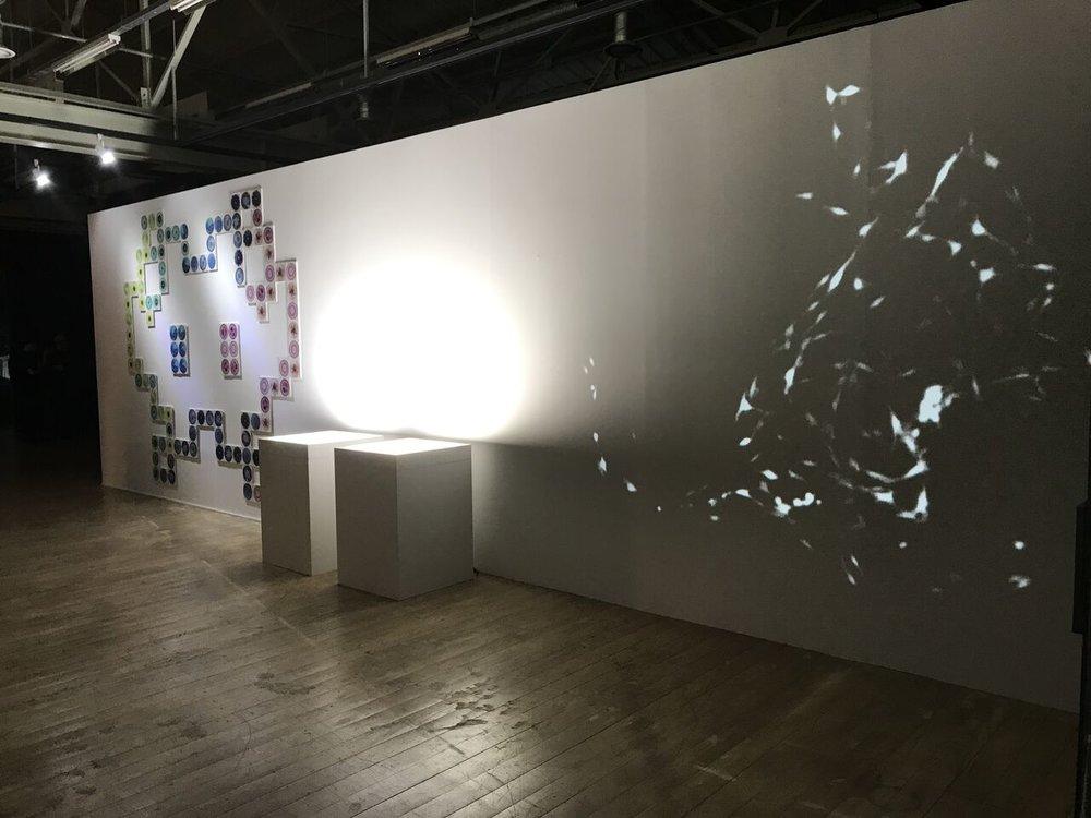 Microuniverse, Da Vinci Creative, 2017