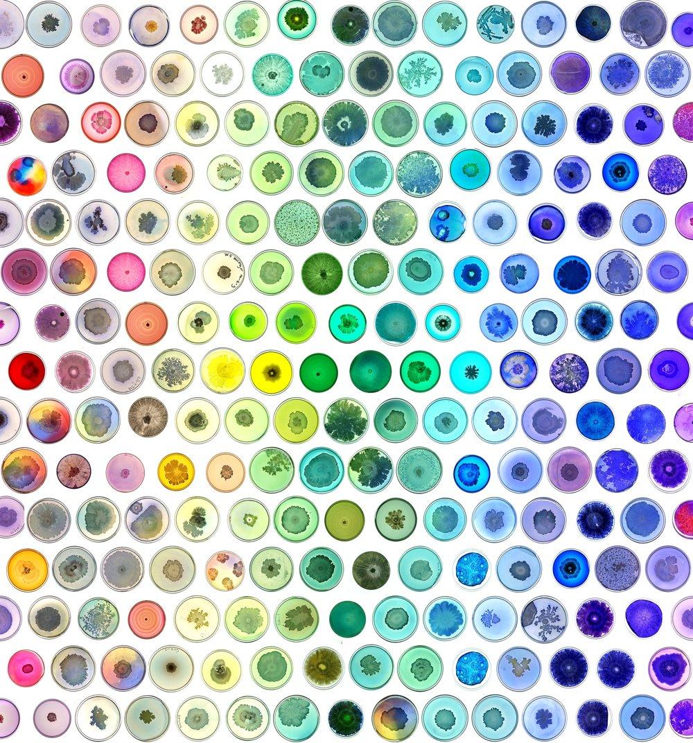 Microbial Rainbow