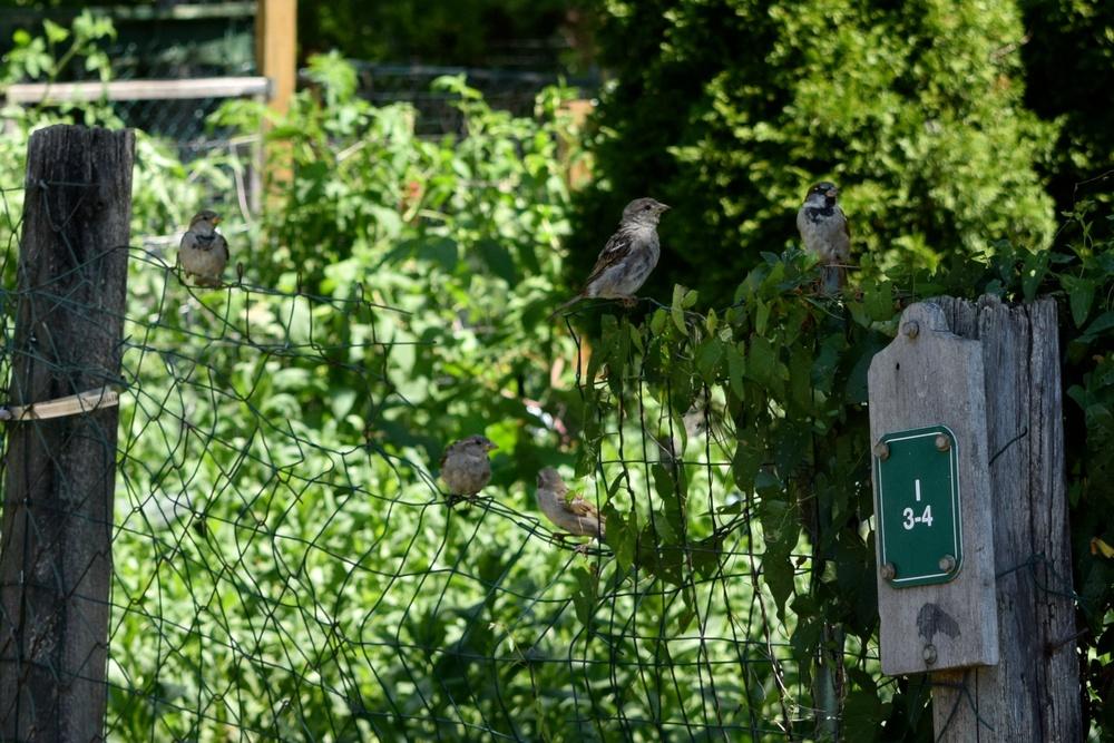 birds_28241260643_o.jpg