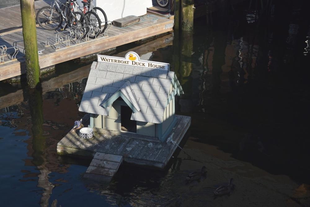 duck-house_28241271593_o.jpg