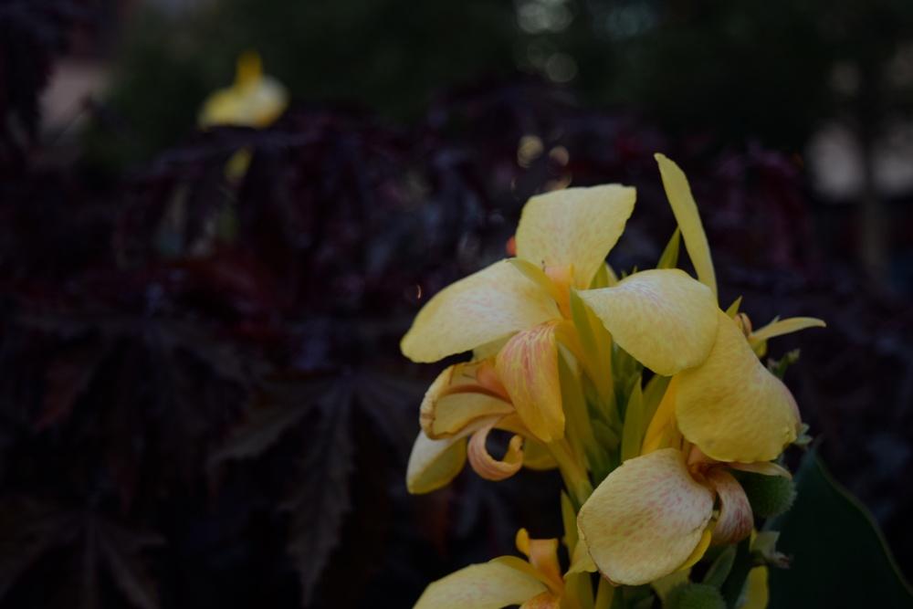 flower-2_28824948216_o.jpg