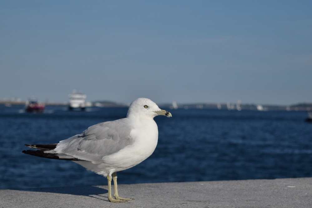 seagull_28856021785_o.jpg