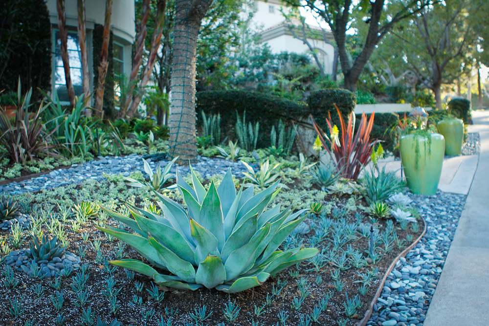 After | Agave Sculpture Garden With Dry River