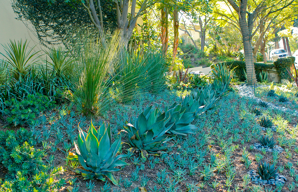 After | Top of Agave Sculpture Garden
