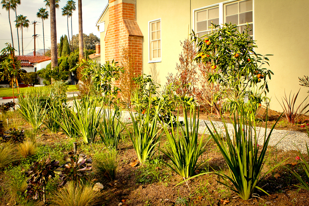 Before | Side Yard of House   Citrus Grove