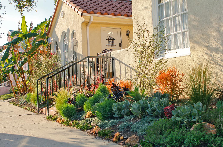 drought tolerant spanish uplift - Living Gardens Landscape Design