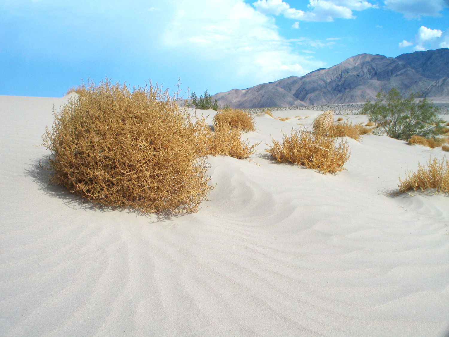 Will There Be Realistic Tumbleweed In RDR2?