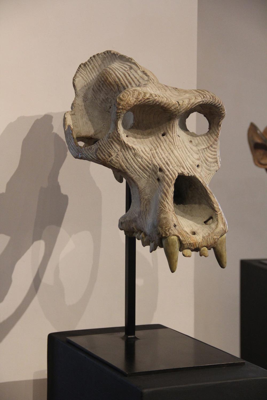 "Crâne De Gorille  Quentin Garel QG106 Bronze 29"" x 16"" x 23"""
