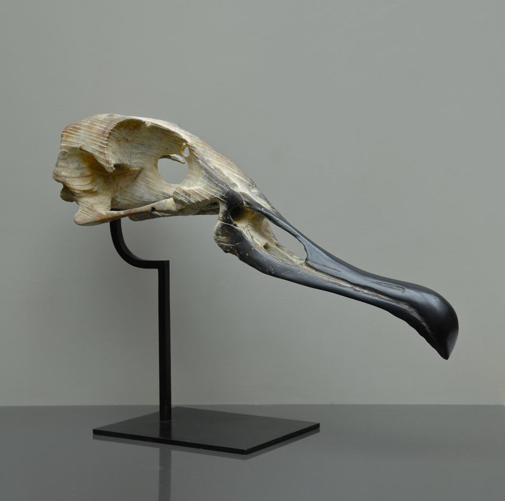"Crâne d'Albatos  Quentin Garel QG112 Bronze 22"" x 30"" x 10"""
