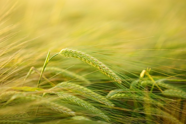 Agriculture/Agribusiness