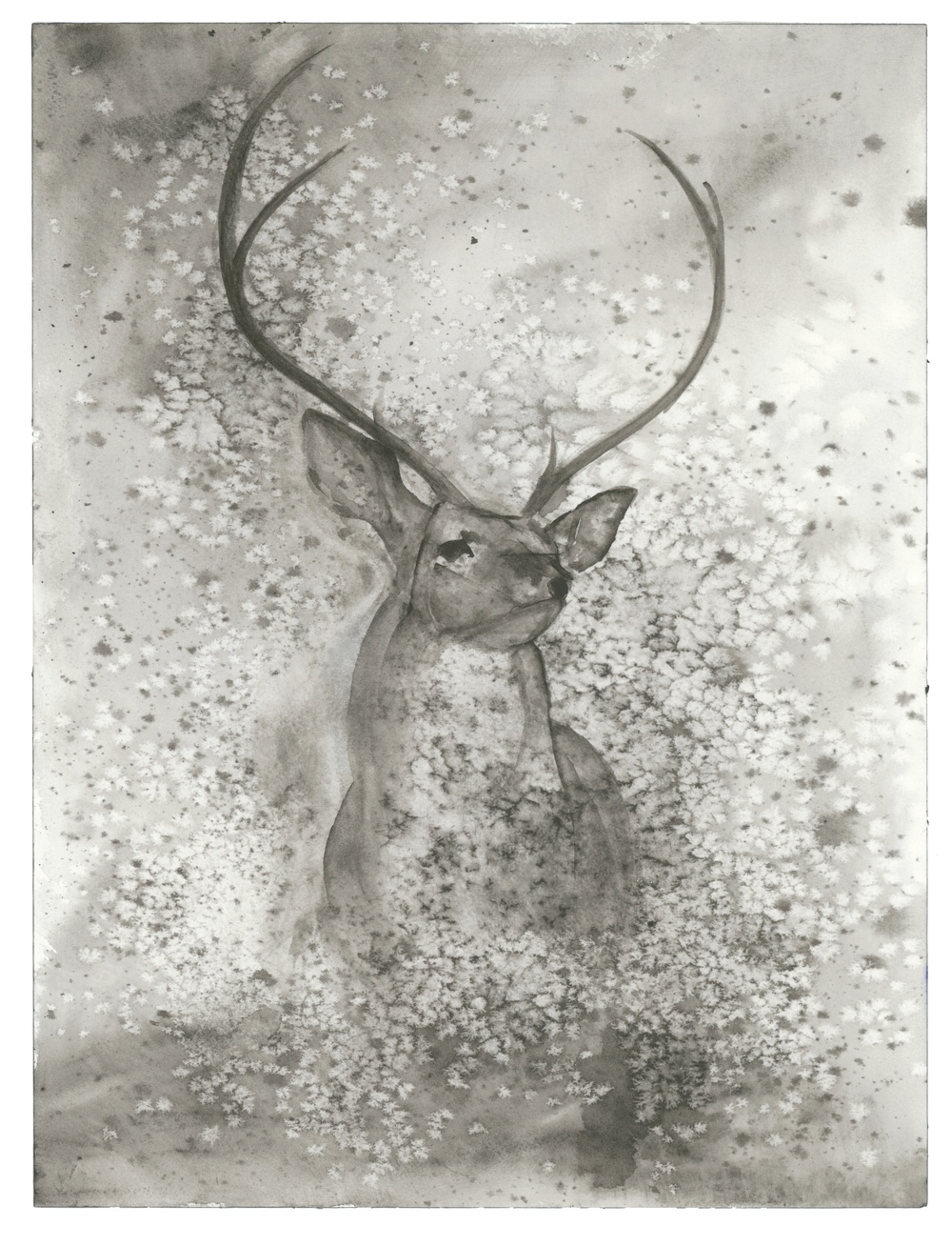 "6 Point Buck  salt scrubbed water color on cold press paper  12"" x 16""  $1000"