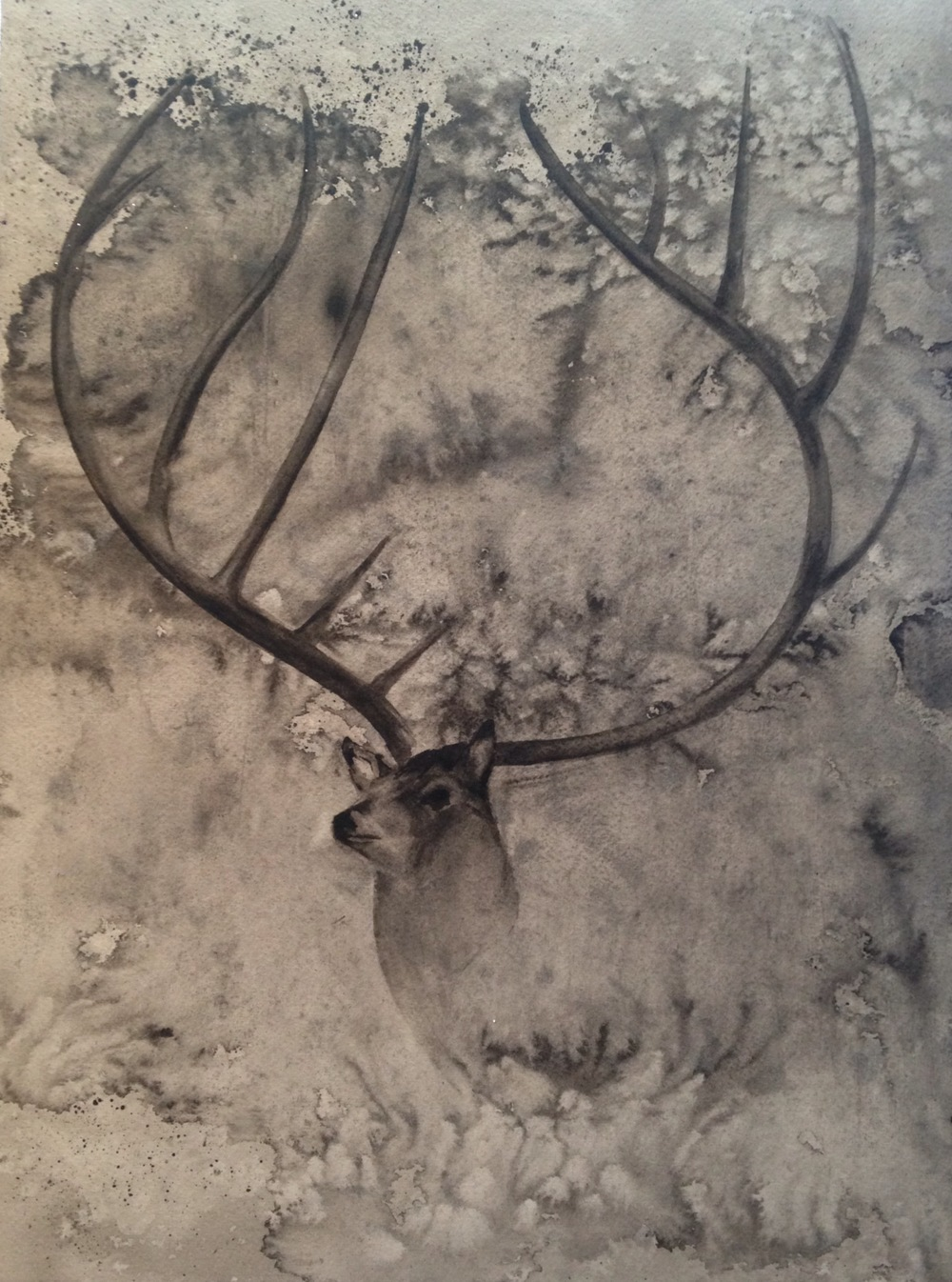 "Eleven Point Buck  salt scrubbed water color on cold press paper  12"" x 16""  SOLD"