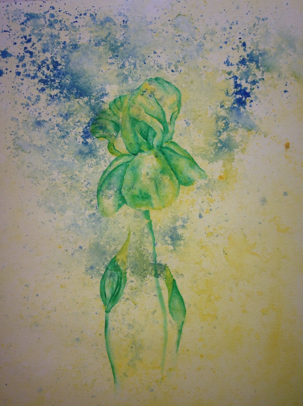 """Yellow Iris of Del Curto Street  salt scrubbed water color on cold press paper  12"""" x 16""""  $500"""