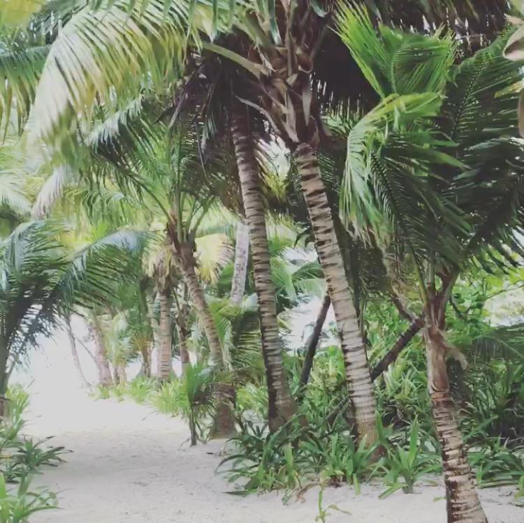 Island Rain.jpg