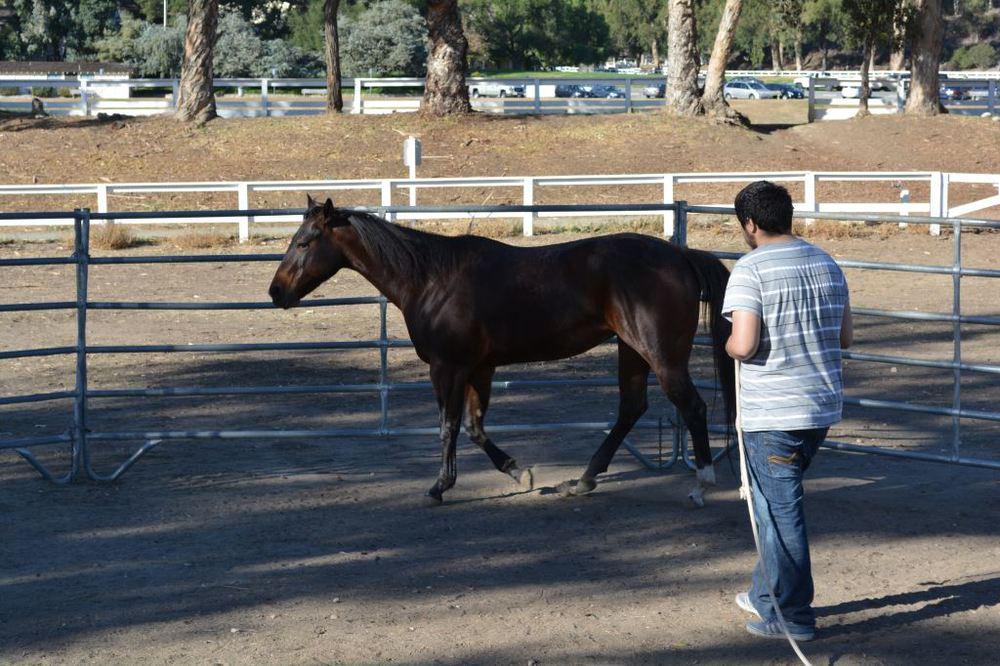 Ismael Exercising Horse.JPG
