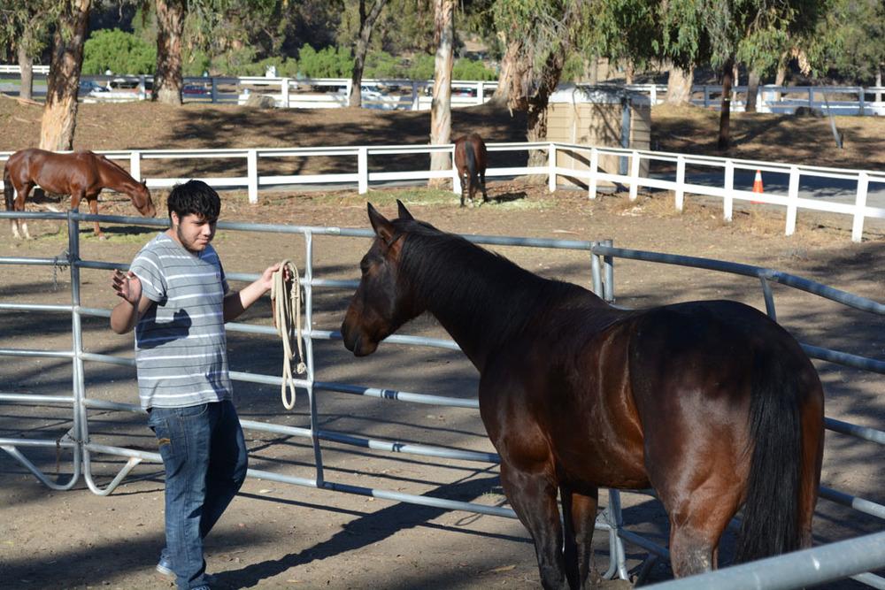 Ismael turning Horse.JPG