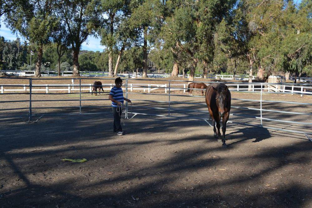 Joshua exercising horse.JPG