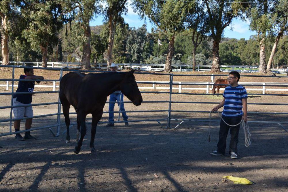 Joshua exercising horse 2.JPG