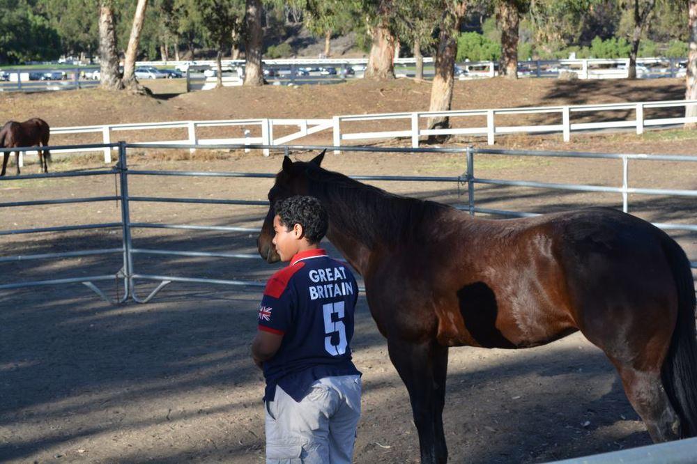Norman Walking Horse.JPG