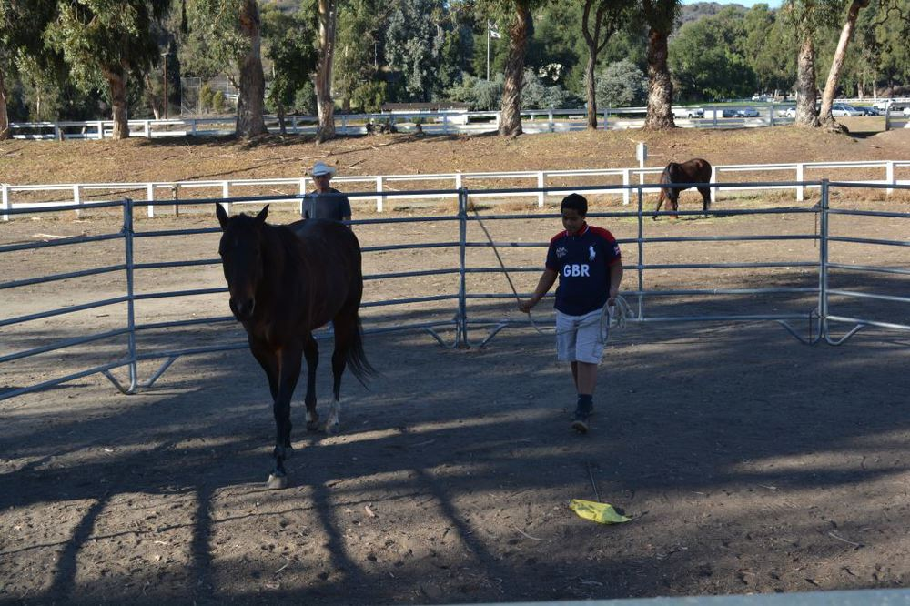 Norman Training Horse 2.JPG
