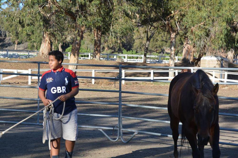 Norman Training Horse.JPG