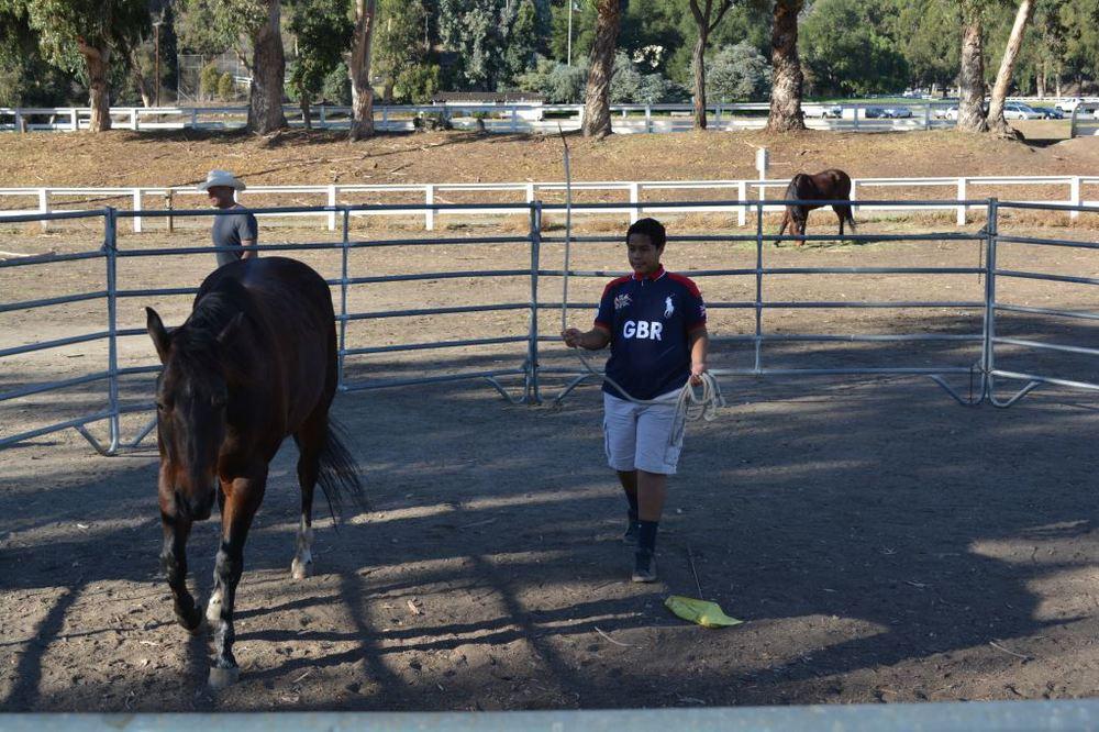 Norman training horse 3.JPG