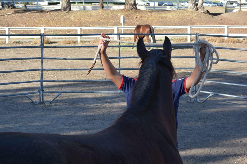 Norman training horse 4.JPG