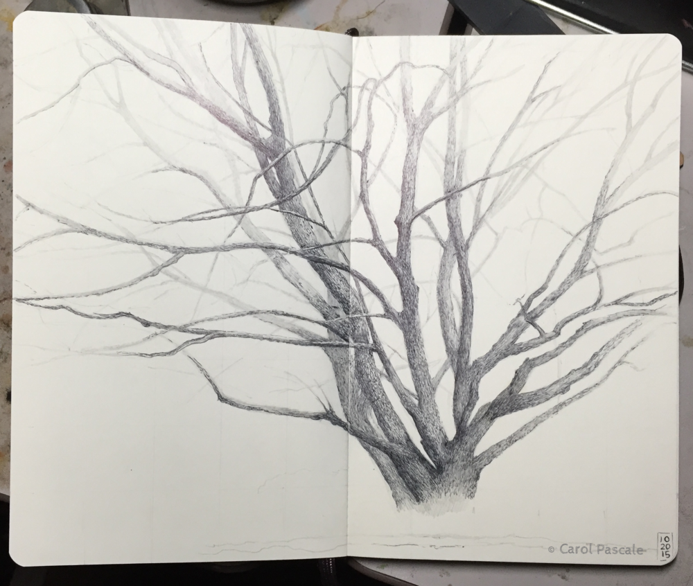 Ballpoint pen drawing of a maple tree in winter