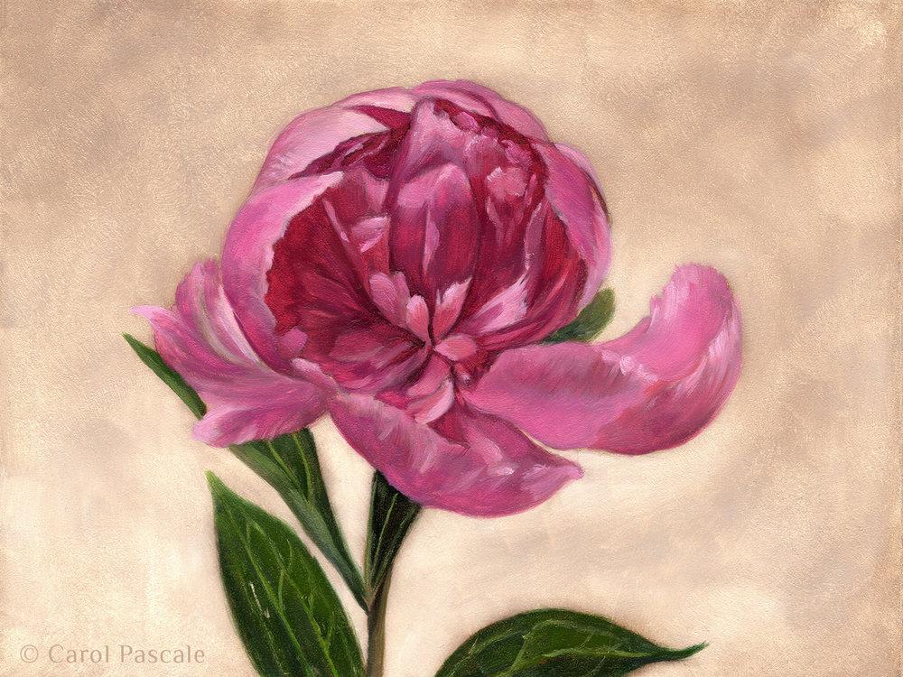 Peony - Original Oil Painting