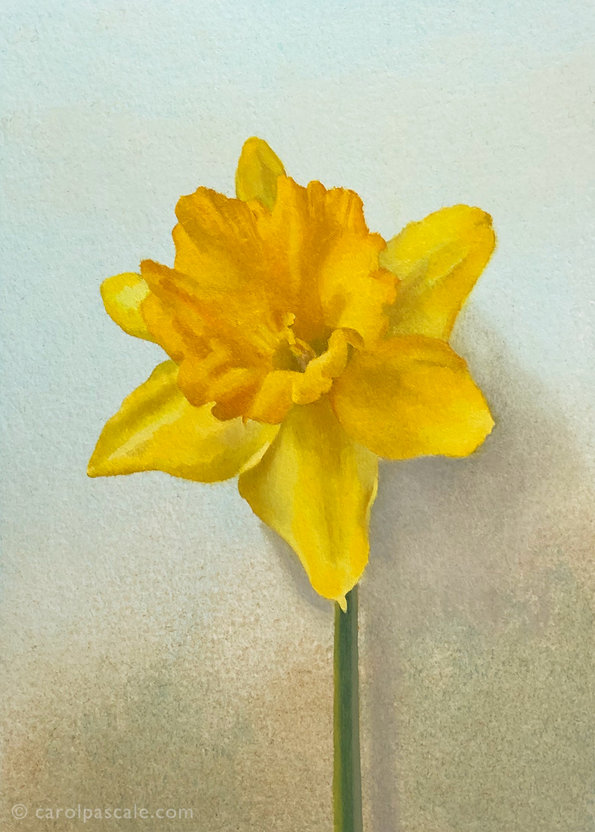 Daffodil - Original Oil Painting