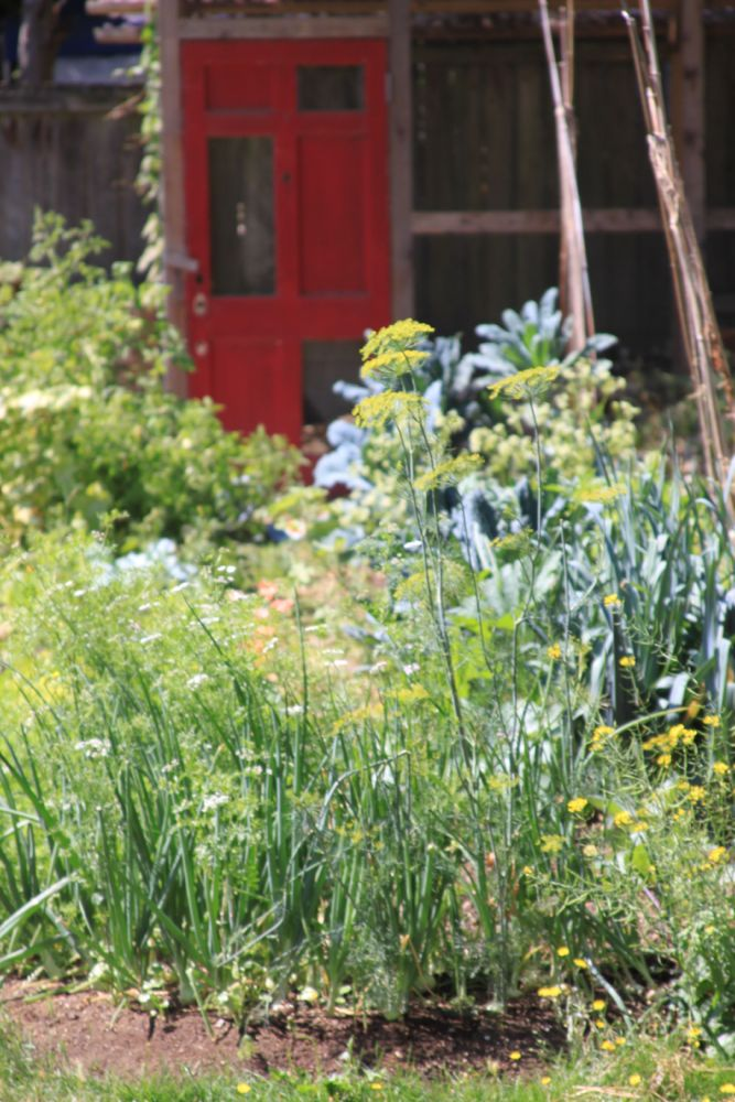 Lupine's amazing garden