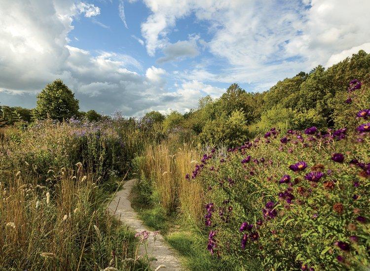 Garden Dreamer Castel Kasteel Van S Gravenwezel Rose Ivy